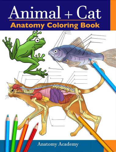 Animal cat anatomy coloring book by anatomy academy
